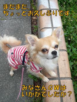 komu0507001