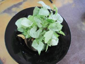 2011/07/24ブログ用 (3)