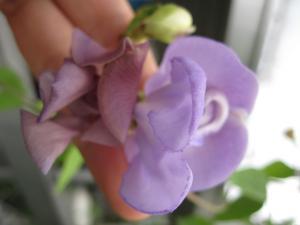2011/08/06ブログ用 (4)