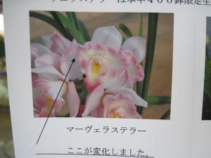 2012/01/28ブログ用 (1)