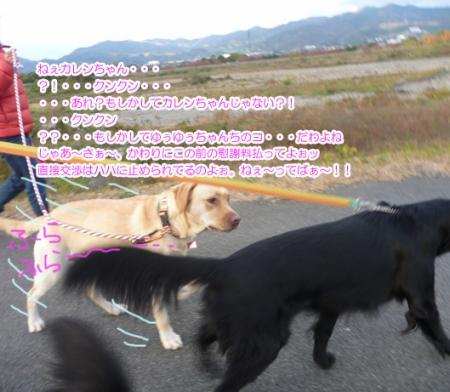 1_20101124215551.jpg