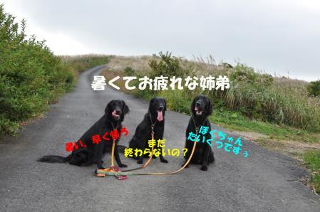 3_20100921011759.jpg