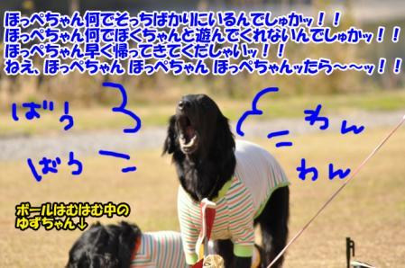 a1_20101213232737.jpg