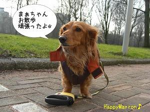 久々の散歩4