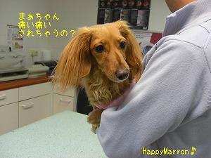 狂犬病20102