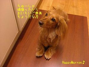 狂犬病20103