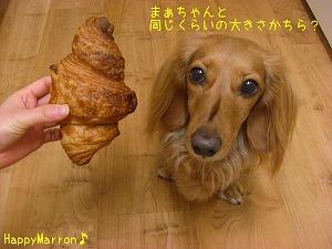 大きなパン4