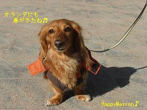お散歩日和6