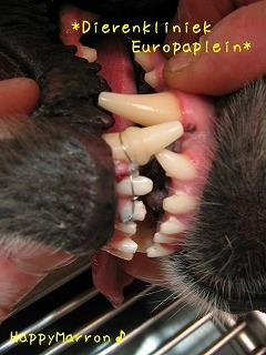 動物歯科5