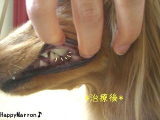 動物歯科2