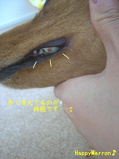 動物歯科1