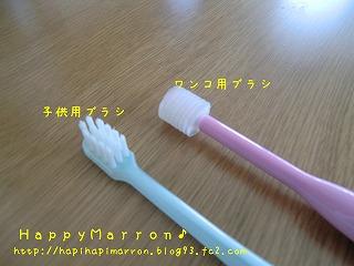 注目歯ブラシ3