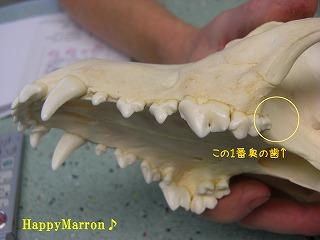 Tooth2.jpg