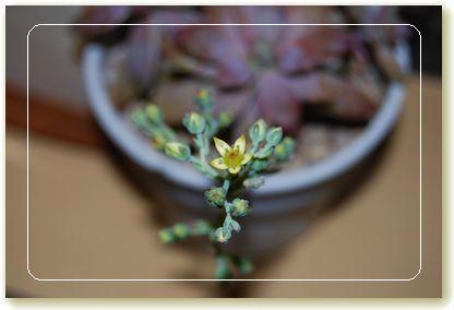 秋麗の花1