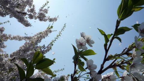 春空模様1