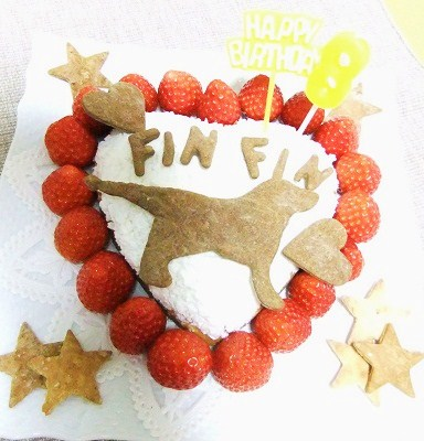 fin2.jpg