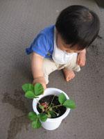 苺! 初収穫~♪
