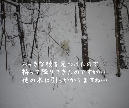 1228-5.jpg