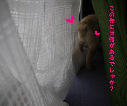 蘭ちゃんカーテン