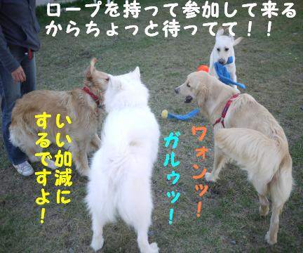 20101015-8.jpg