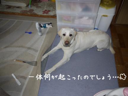 20110715-7.jpg