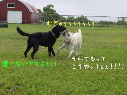 20110716-3.jpg