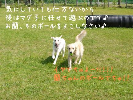 20110801-5.jpg
