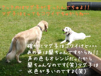 20110801-8.jpg