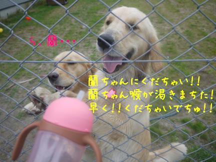 20110810-9.jpg
