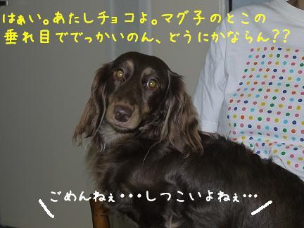 20110917-3.jpg