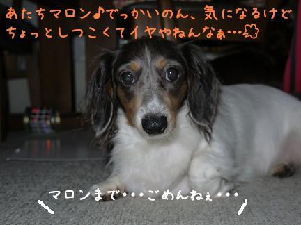 20110917-4.jpg
