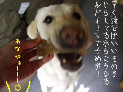 20110918-6.jpg