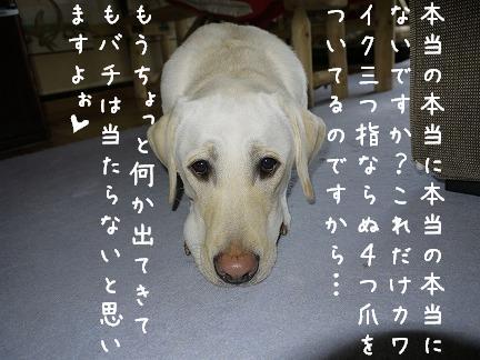 20110921-6.jpg