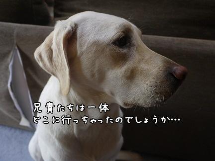 20111101-10.jpg