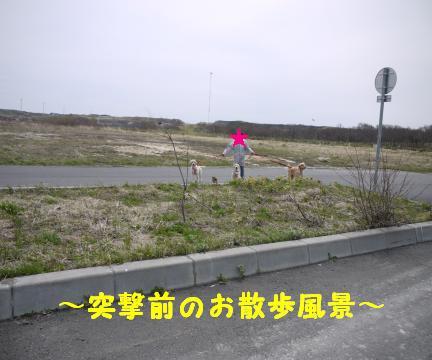518-1.jpg