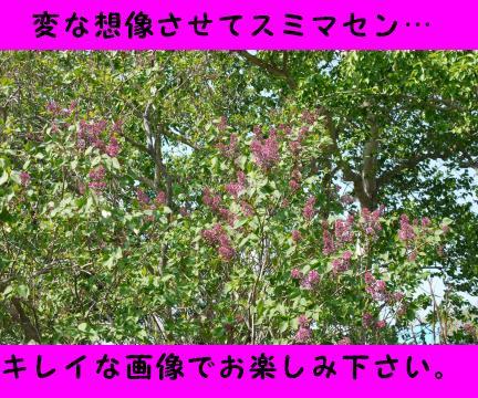 615-2.jpg