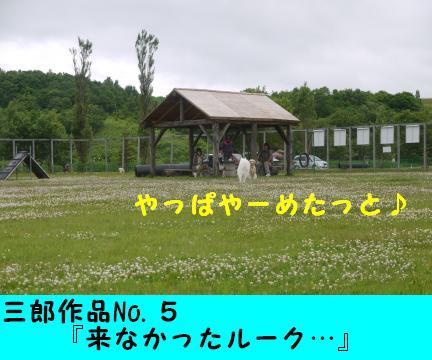 79-3.jpg