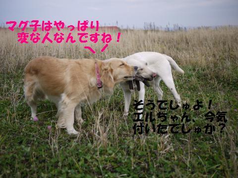 P1000530_convert_20091109181900.jpg