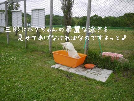 P1110372.jpg