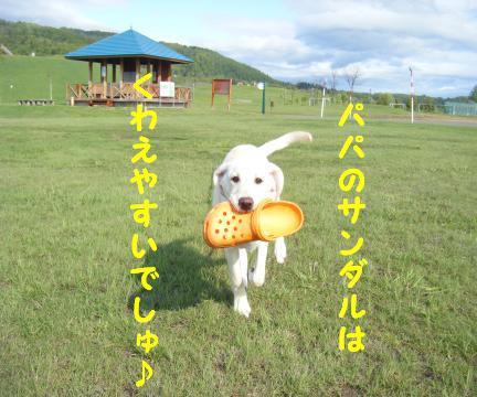 kawaii3.jpg