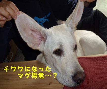 kawaii8.jpg