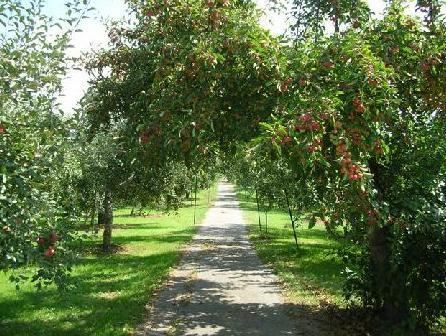 リンゴ畑のその先に・・・