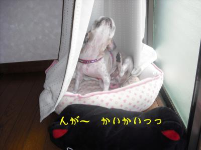 silent4_convert_20080830171222.jpg