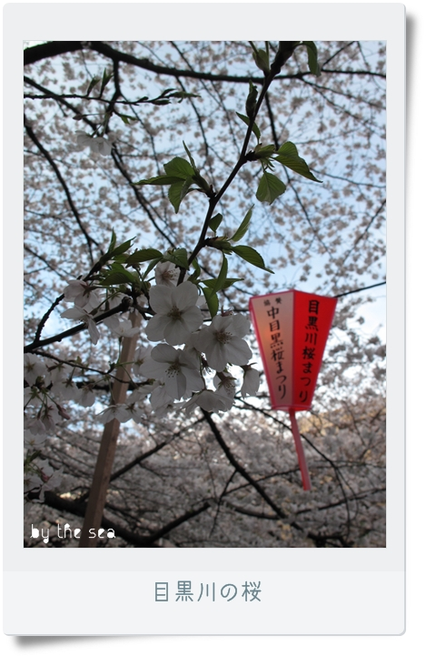 中目黒 桜