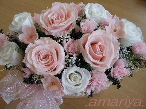 ピンク桜草