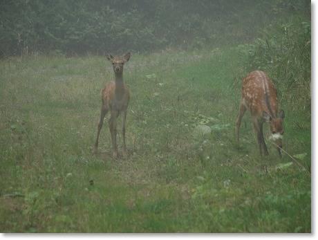 鹿さん発見~~♪