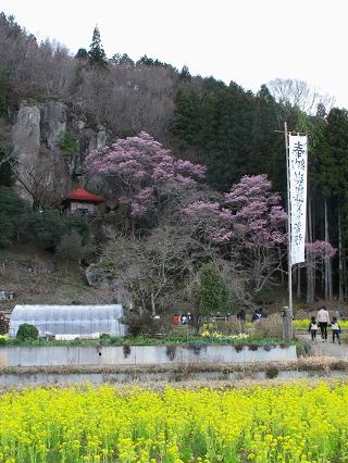 2010.4.10岩観音サクラを見る会