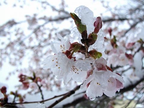 2010.4.18芦野 (1)