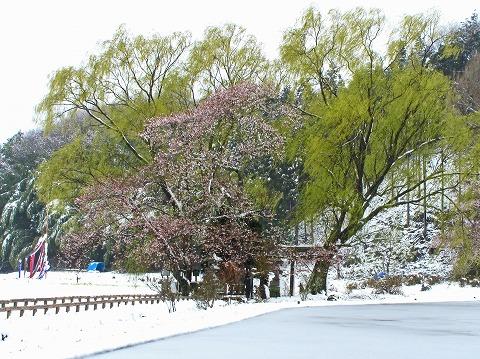 2010.4.18芦野 (2)