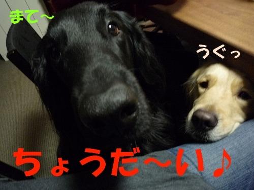10_20110208164447.jpg